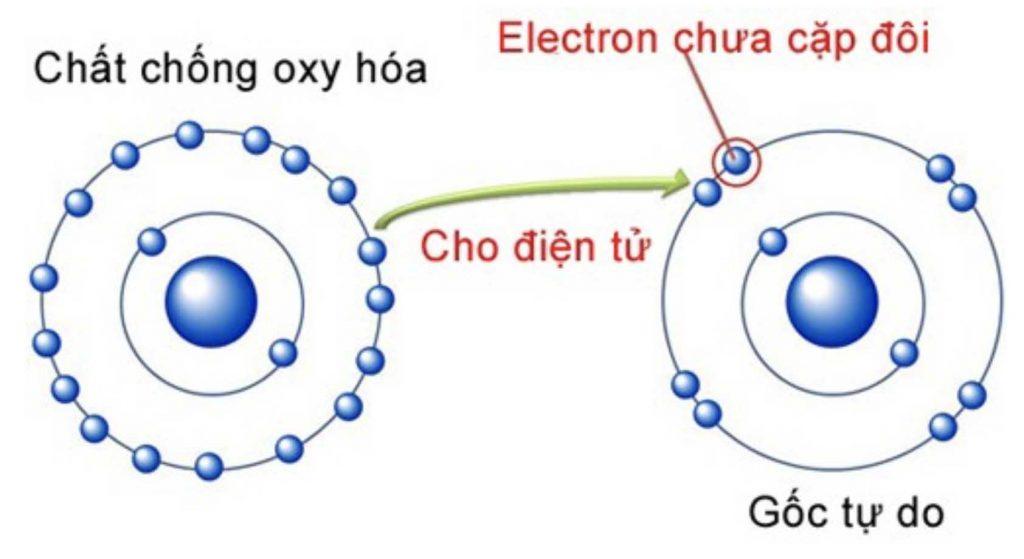 chất chống oxy hoá 1